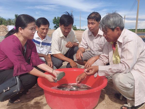 Sóc Trăng: Nuôi loài cá cho toàn con đực ở chung 1 ao, bắt 235 tấn, lãi ròng 1 tỷ đồng - Ảnh 1.